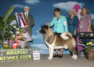 -dog-show-photographer-west-coast_AKITA BIS