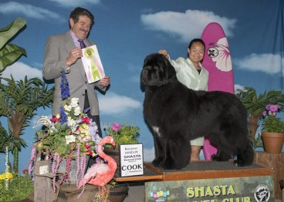 -dog-show-photographer-west-coast_NEWF BJRSH
