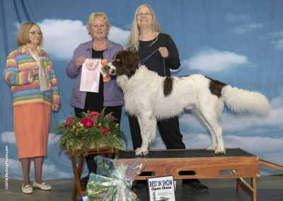 BEST IN SHOW OPEN SHOW